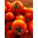 Tomate Ronde (Maroc)